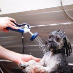 Pet Grooming in Etobicoke