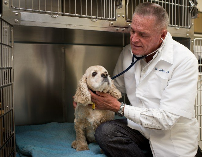 Dr John checking small dog