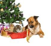 dog and cat under a christmas tree