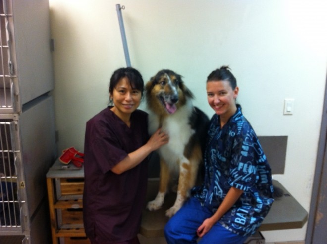 Etobicoke Dog Grooming Dog Groomers Near Etobicoke The Best Dog