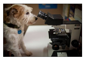 dog at microscope