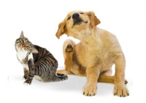 How to Prevent your Pets from Ear Infections