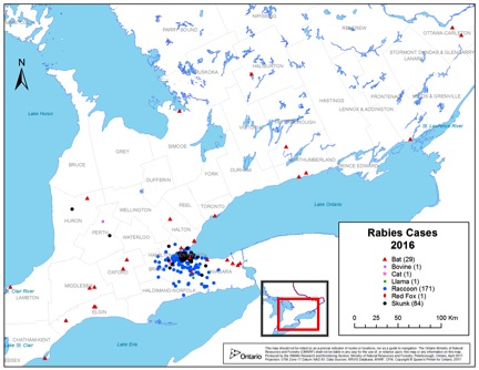 Above is a map of all positive cases of Rabies in both wildlife and domesticated animals in 2016 (image courtesy of Government of Ontario)